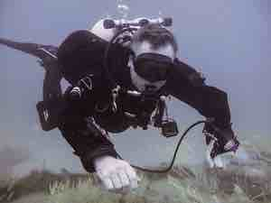 RAID Performance Diver